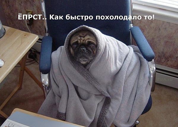 Открытки россии, картинки замерзла как цуцик