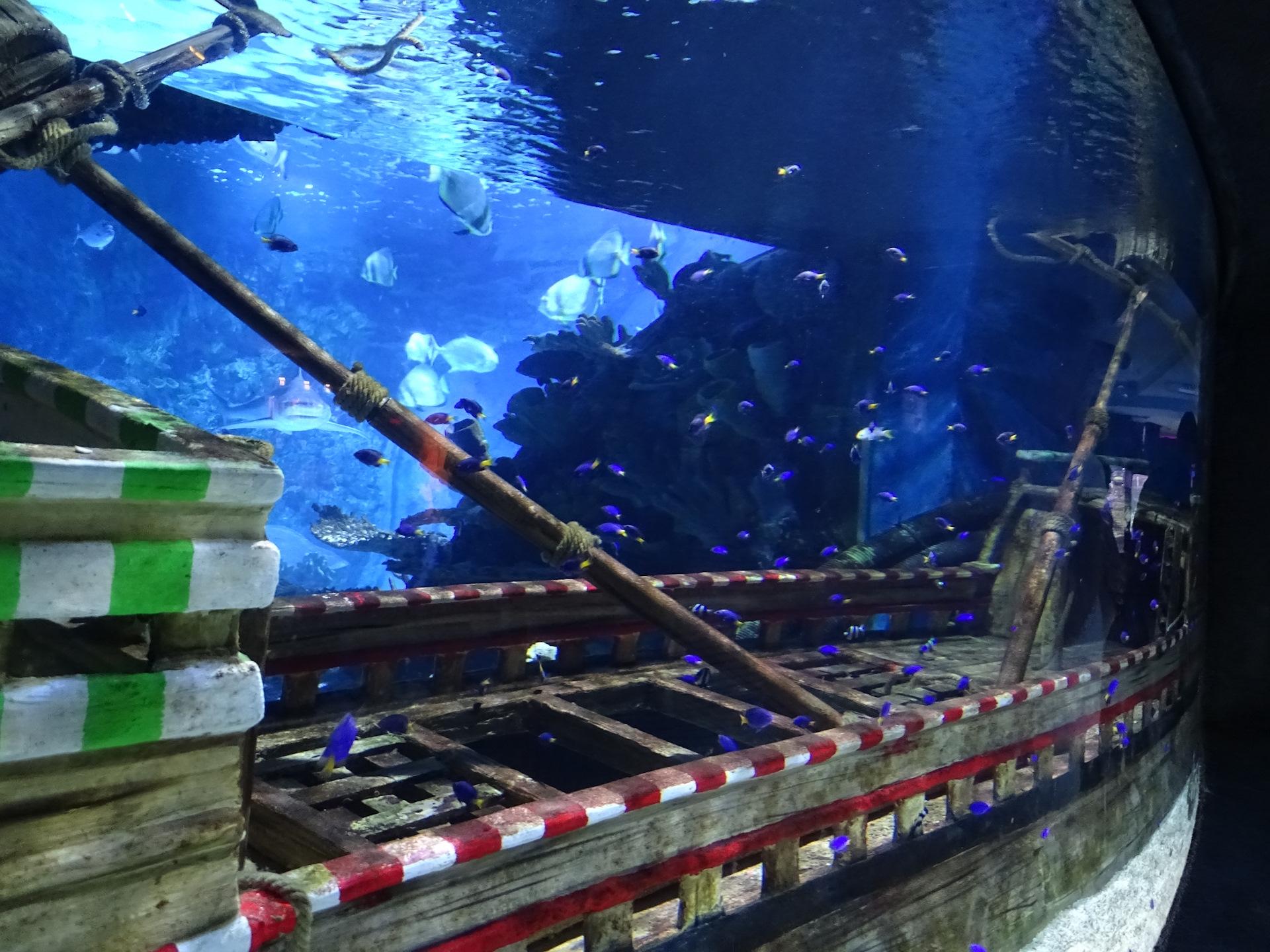 картинки затонувших кораблей для аквариума соблазнила садовника секс