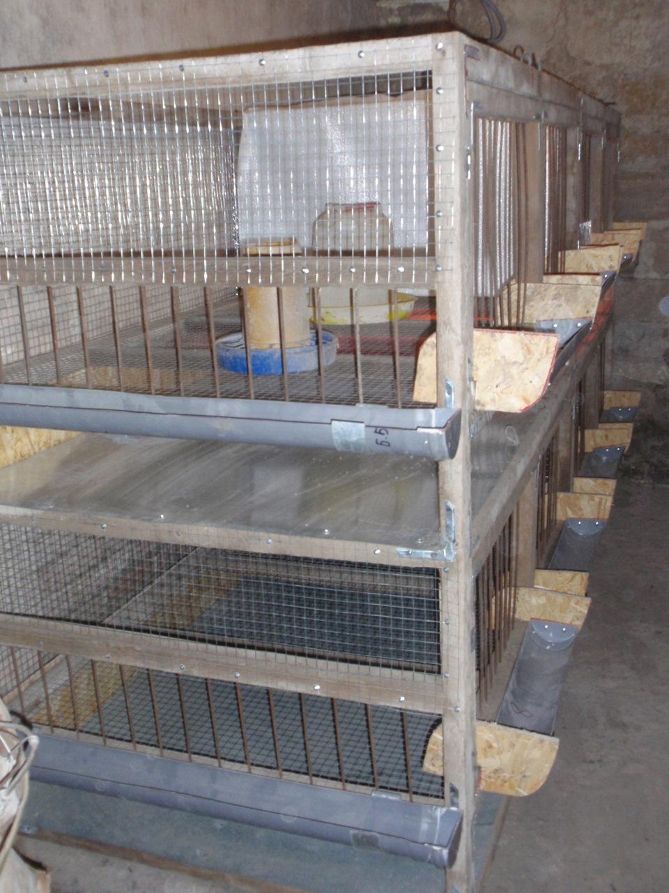 Клетки для куриц-несушек своими руками. Размеры клетки для 23