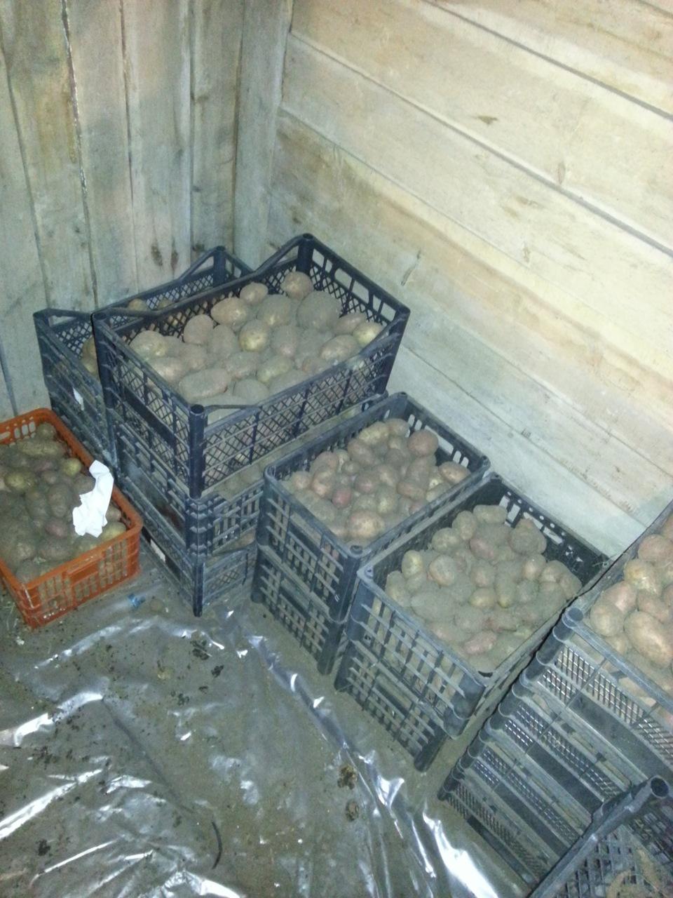 Подвал, обустроенный в качестве погреба для сохранности продуктов питания, в отопительной системе не нуждается – в таком хранилище всегда должно быть немного прохладно.