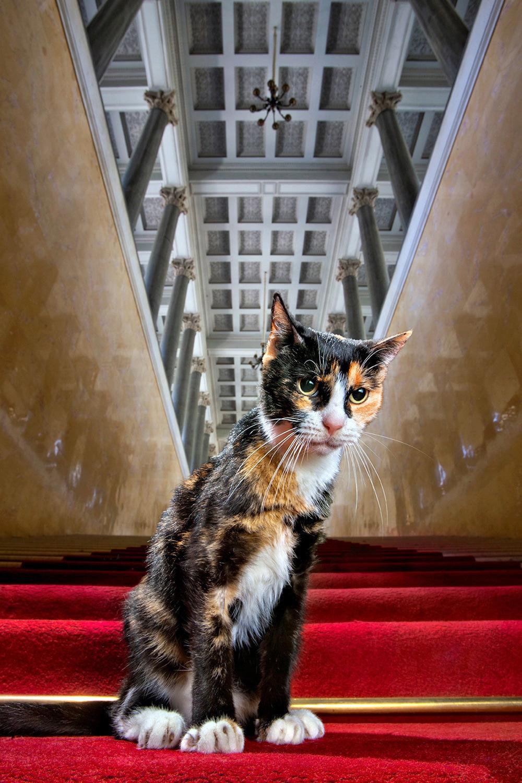 это эрмитажный кот фото стрелки, контуринг, накладные