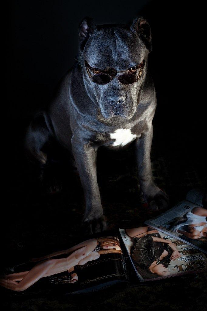 Пес и баба секс