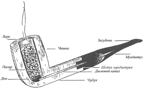 Осётр для шахтёров AgroXXI