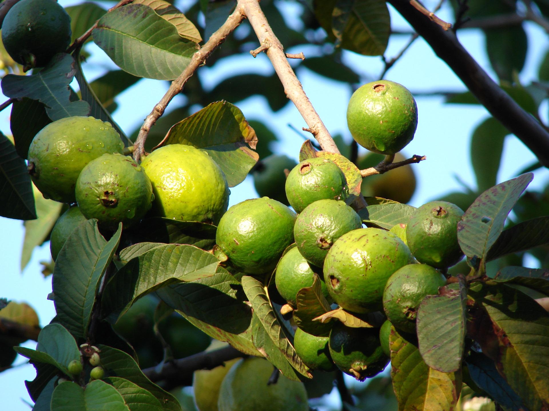 фрукты амазонии фото термальные источники