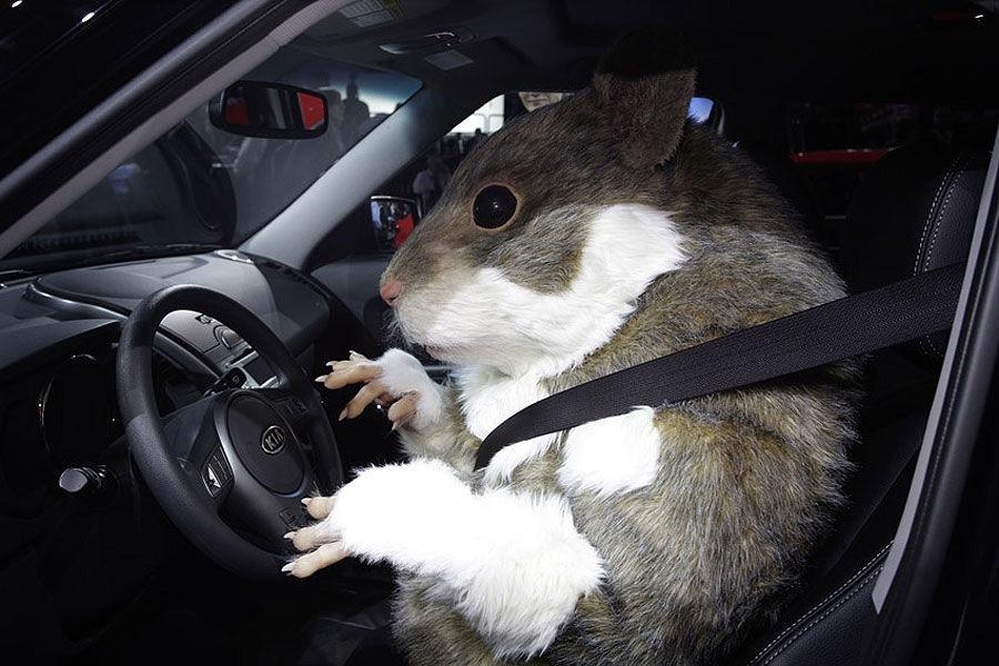 Море жди, прикольные открытки с мышами на машине