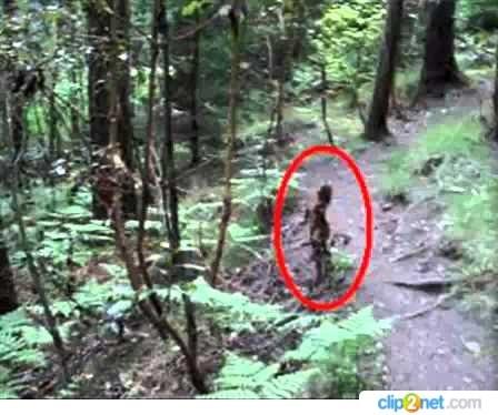 леший в лесу картинки