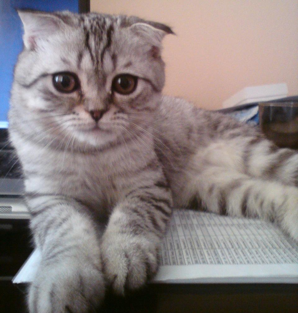кто из котов больше линяет