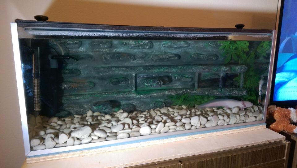 Задний фон аквариума своими руками 95
