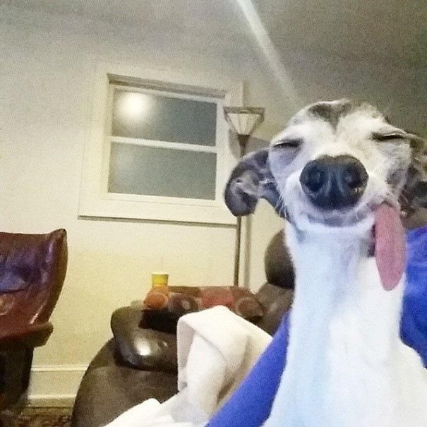 Марни знаменитая собака своим висящим на бок языком