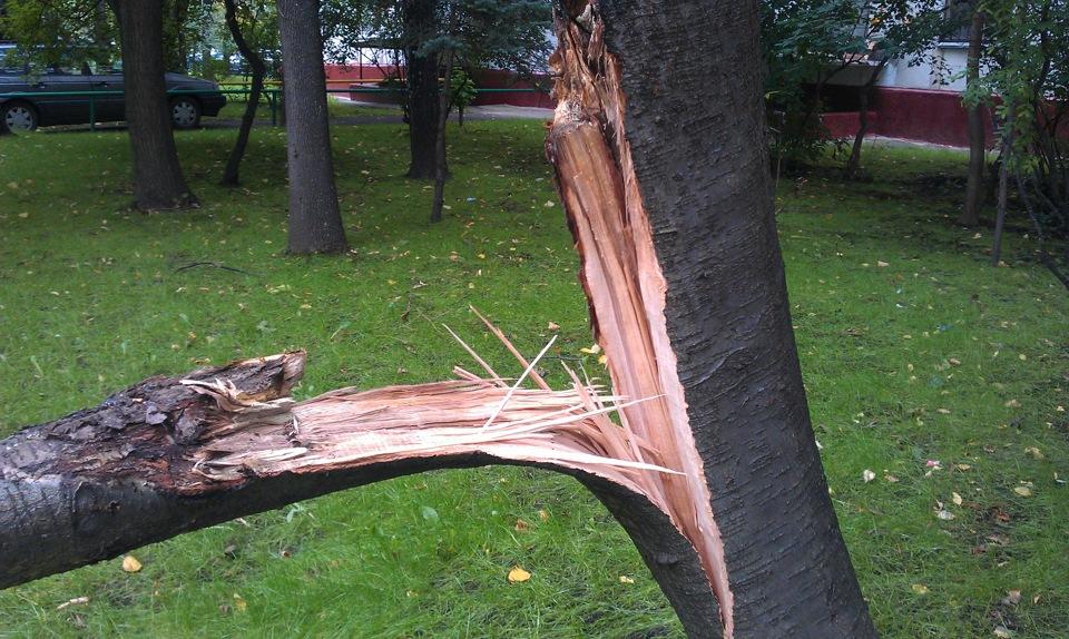 упало дерево фото