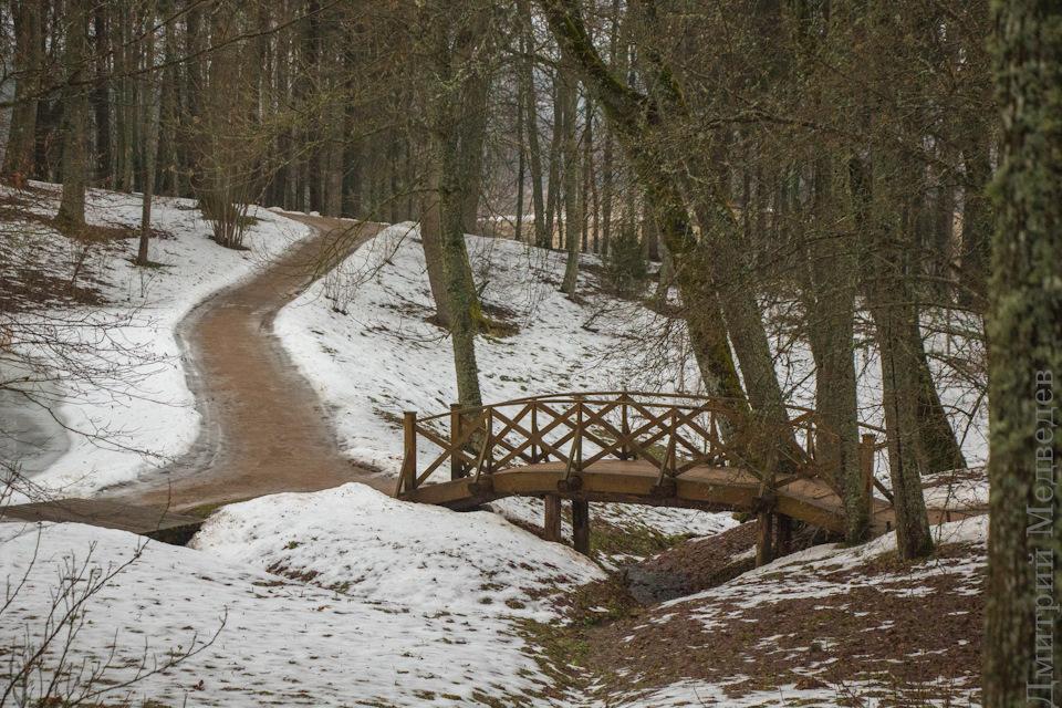 Уютный тихий лес