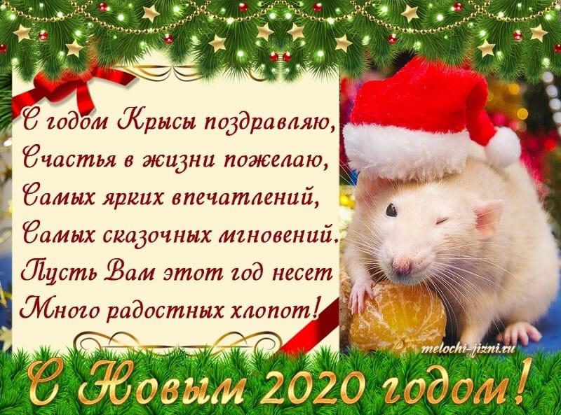 Красивое поздравление с годом мышки необычный окрас