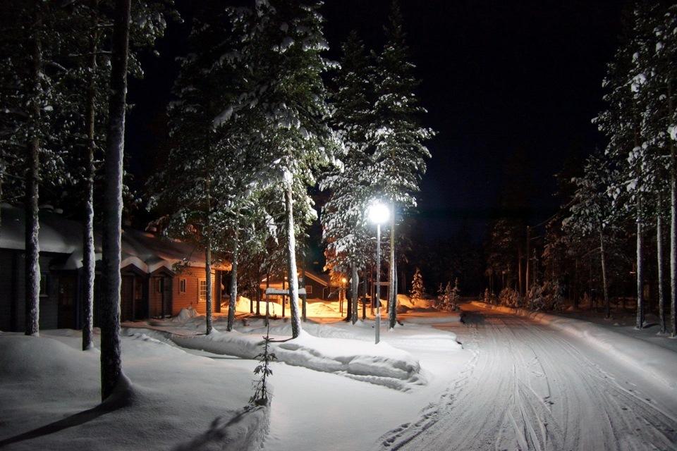 смогут различить курорты зима лес картинки ночь котята, без права