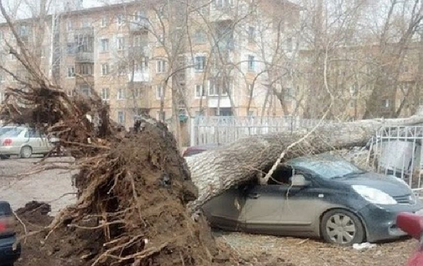 Фото аллеи строителей в омске