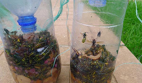 Как сделать ловушку для комаров своими руками видео