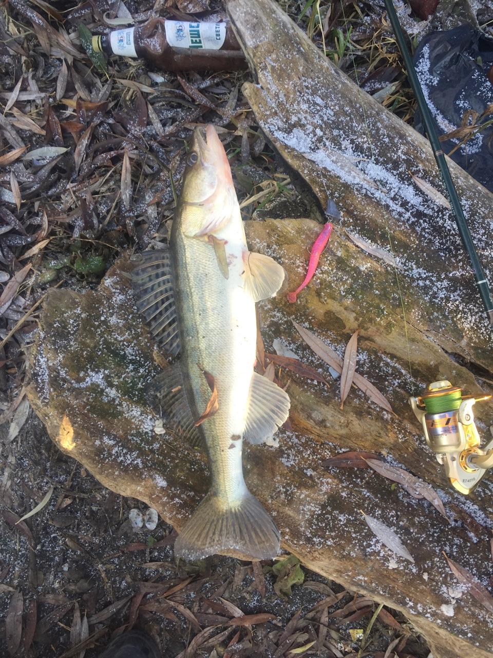 Весенняя рыбалка спиннингом на реке Псел (апрель 2016)