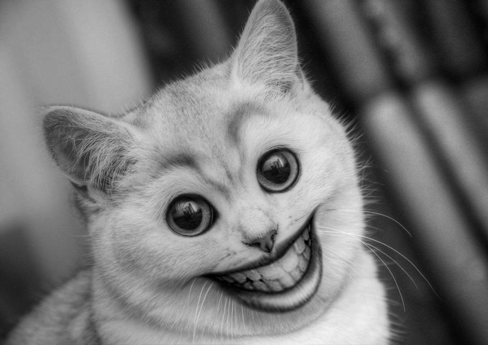 Прикольные картинки на аву с котом