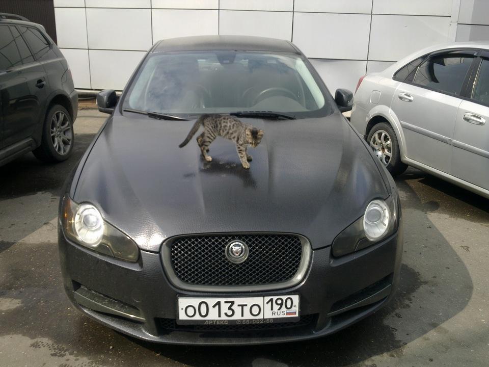 значок ягуара: