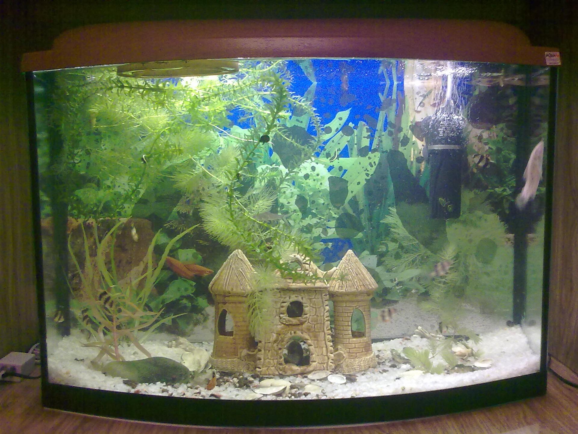 аквариумист в ссср фото хуже