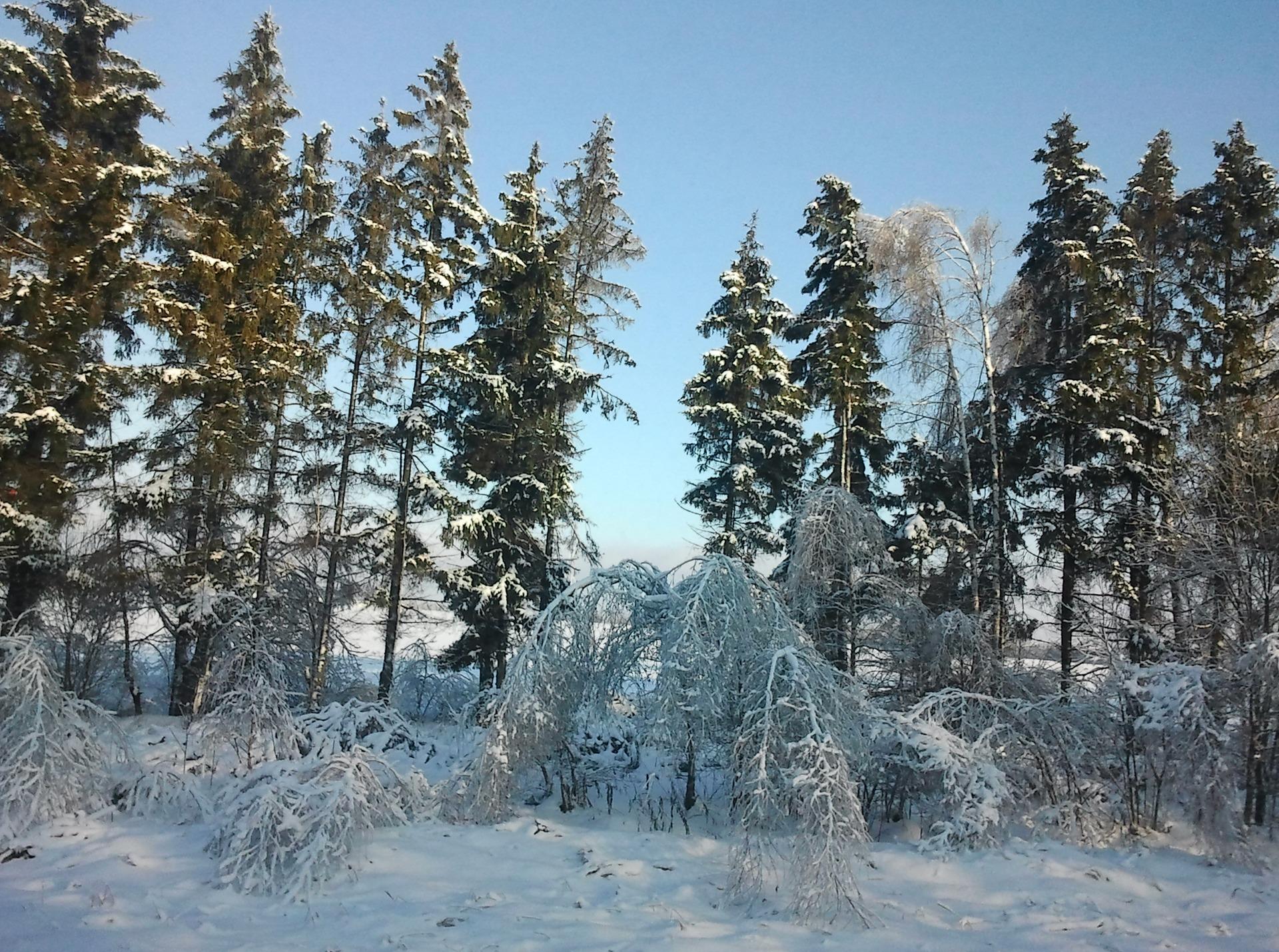 Картинки зима новый год и рождество