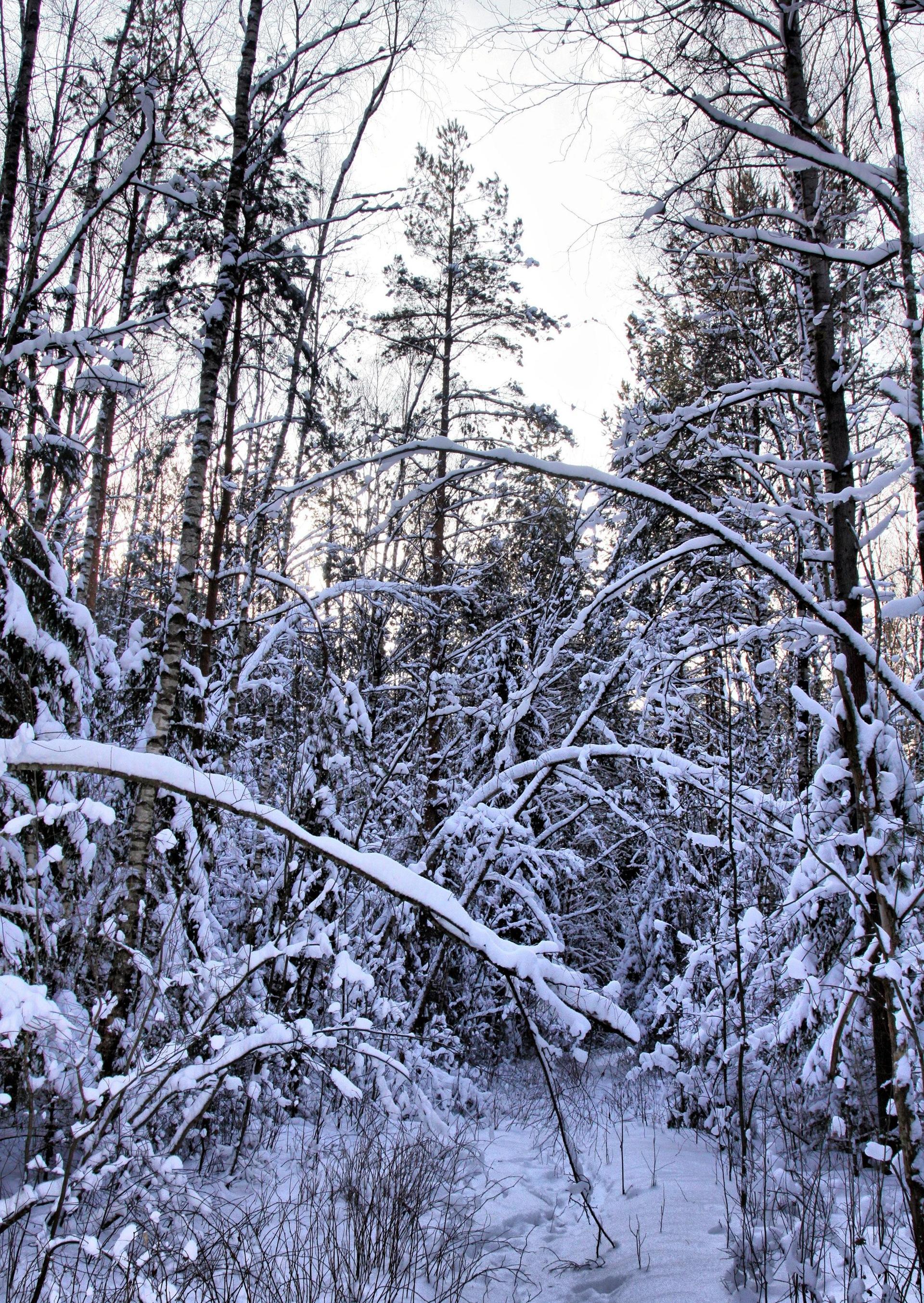 Shirenow › блог › зима лес