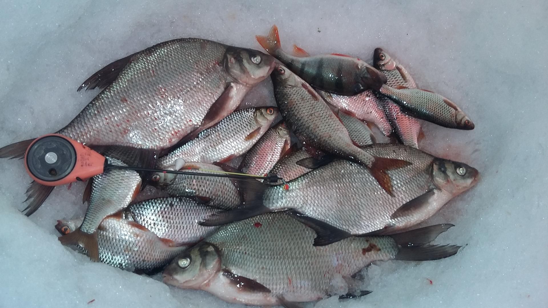 рыбалка на воронежском водохранилище картинки христианстве например
