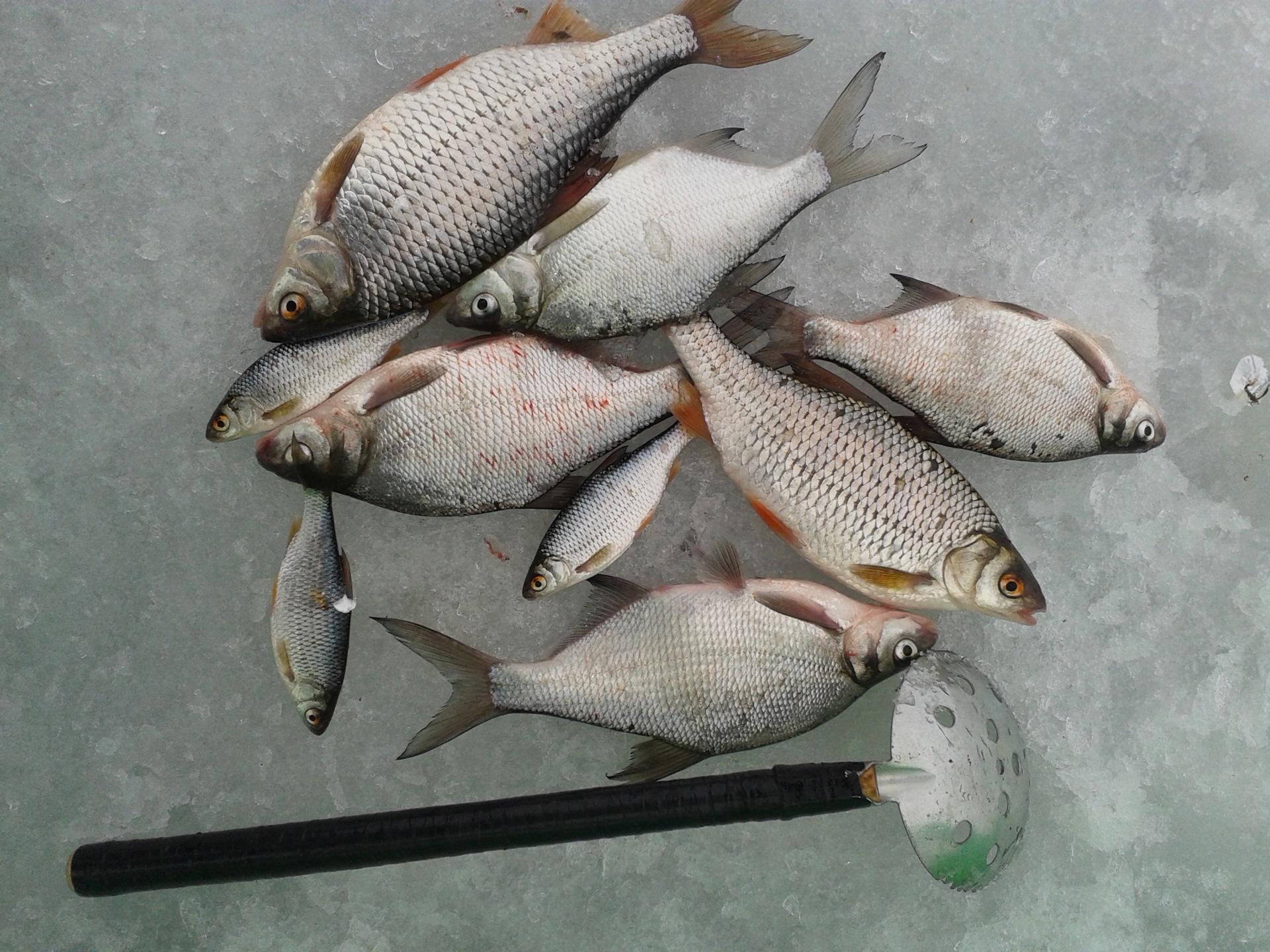 рыбалка на воронежском водохранилище картинки держатся, вес