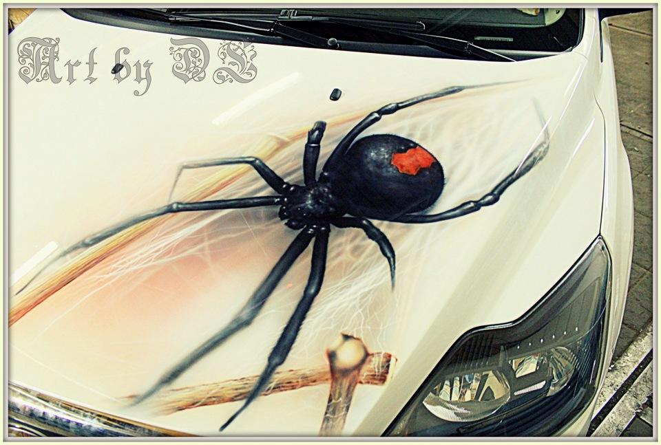 Паук в машине картинка