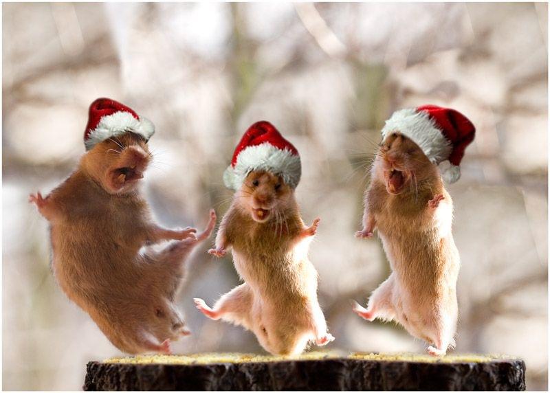 Смешные картинки при новый год