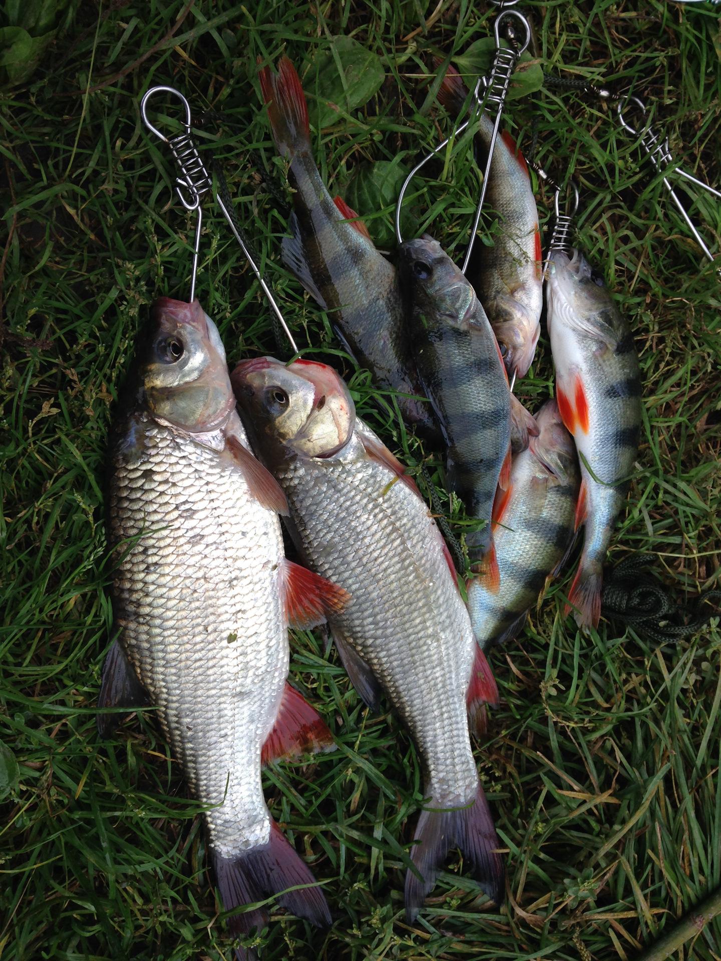 Рыбалка на оке в кочемарах