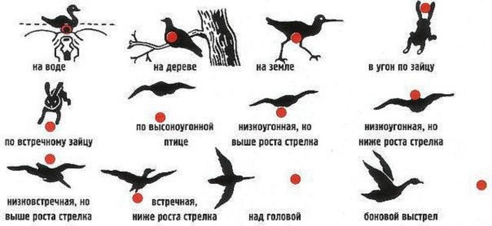 Bask дробь для охоты на фазана мифы