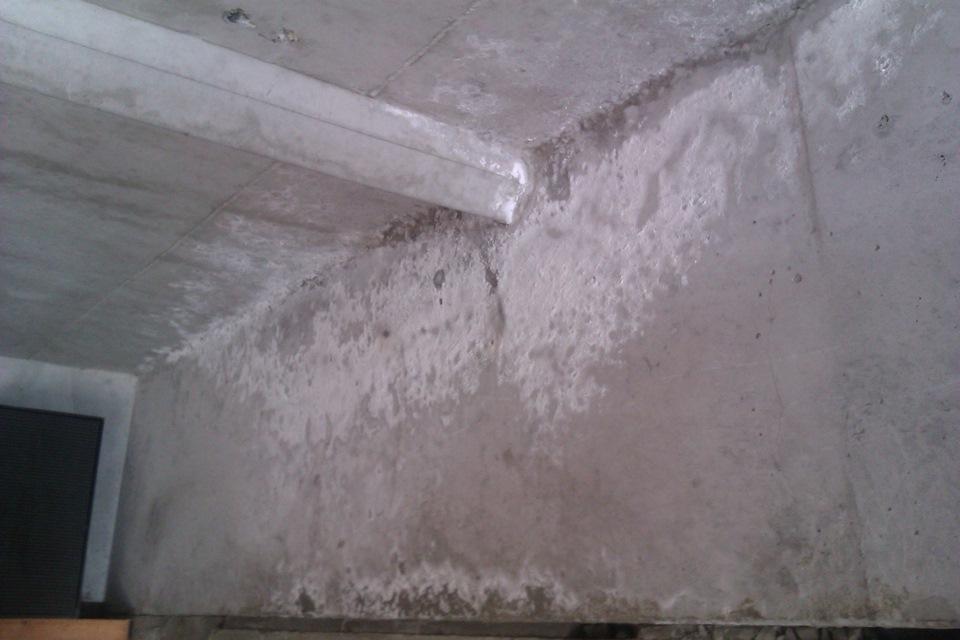 Грибки по бетону плотность раствора цементного марки 150