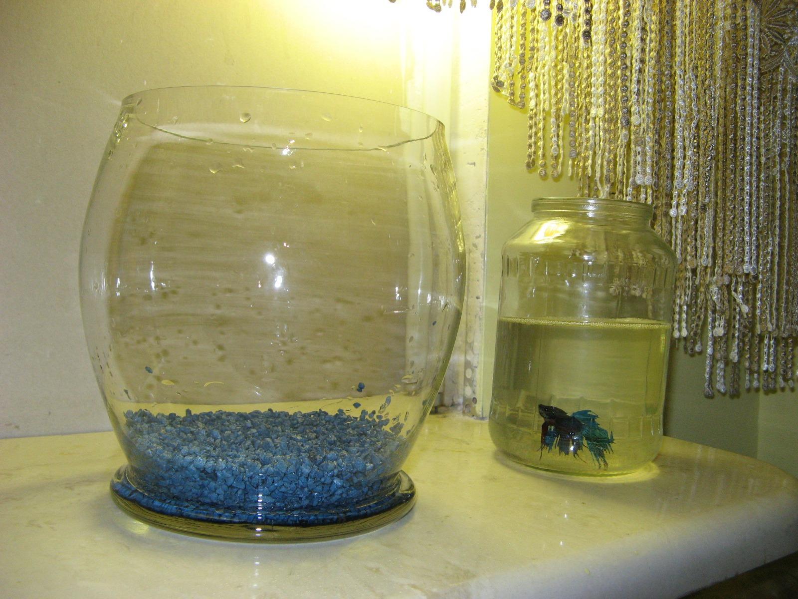 Аквариум без воды своими руками