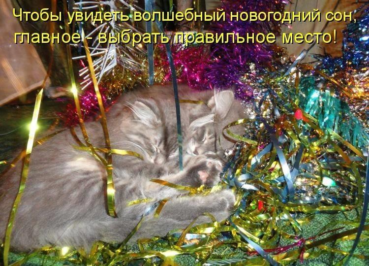 Картинки, картинки новогодние приколы с надписями