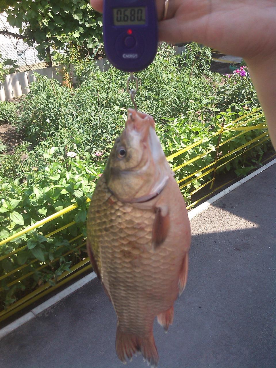 рыбалка на воронежском водохранилище картинки растрескивания кракелюр-лака образовавшихся