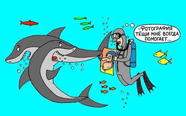 Анимированная, открытки с днем рождения акула
