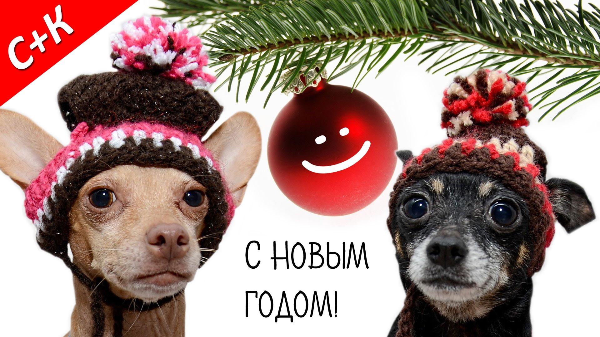 Прикольные картинки с новым годом собаки