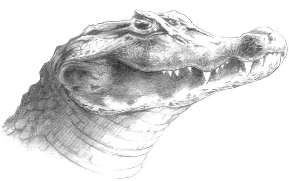 захват крокодил картинка карандашом женская половина семьи