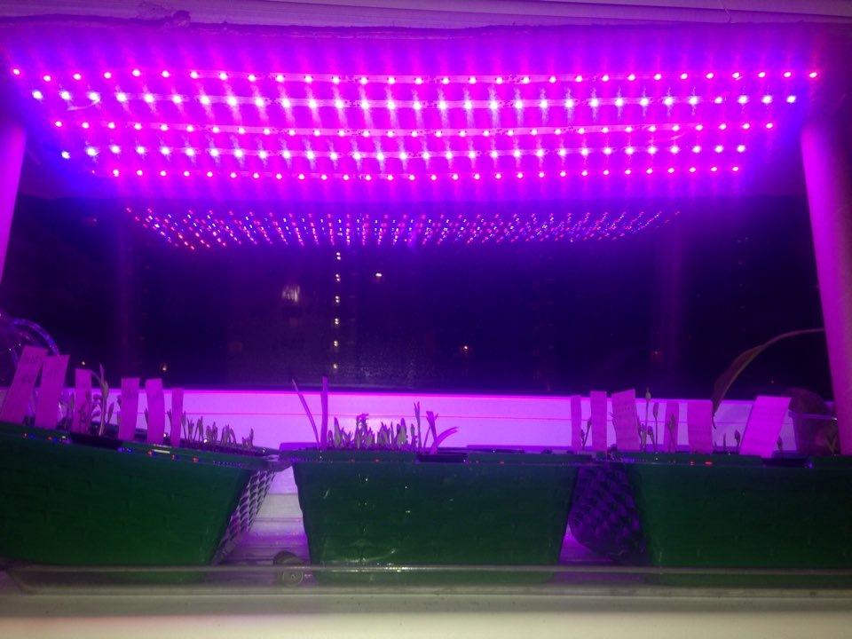 Подсветки для рассады из светодиодной ленты своими руками