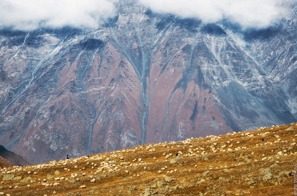 15 Барашки на фоне горы Куру (3302 м).