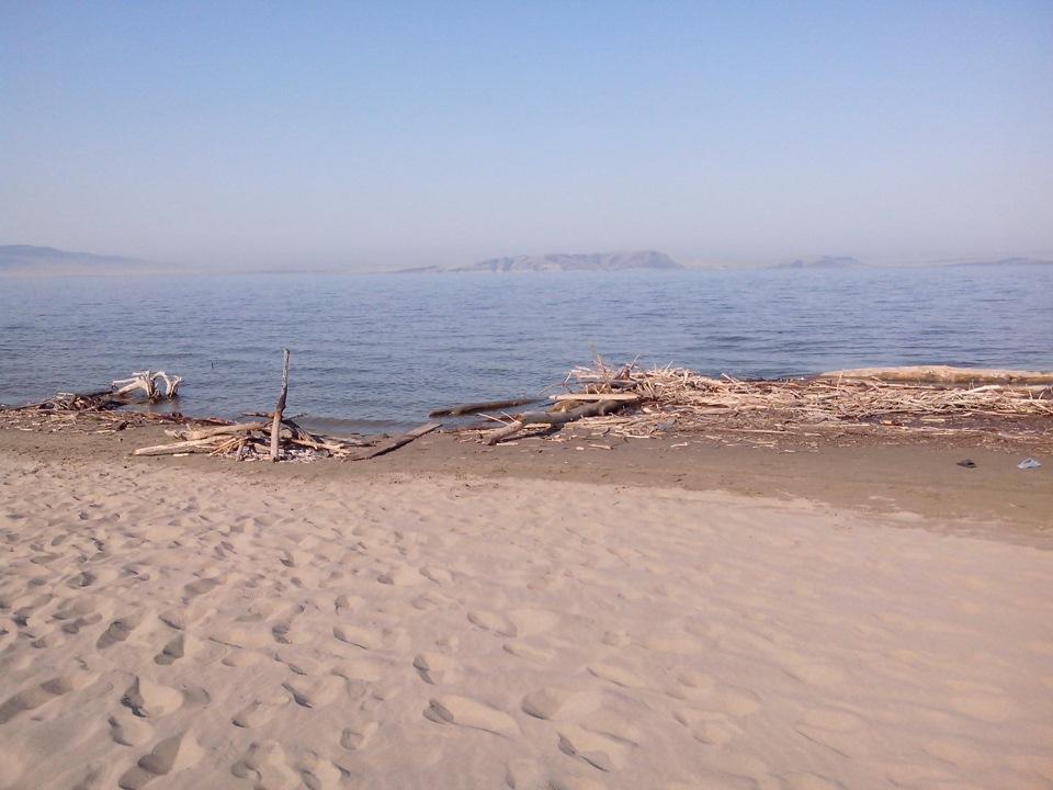 сорта фото лебяжье красноярское море соляриев особыми розовыми