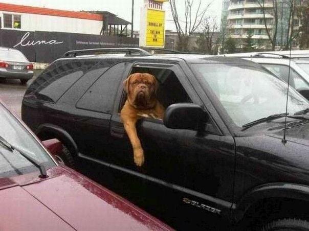 Собака танцует как босс Dog dancing like a boss ...