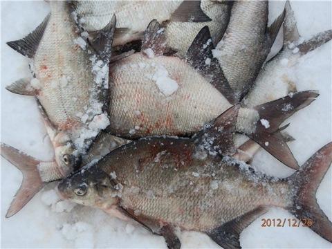 Зимняя рыбалка на туймазинском водохранилище