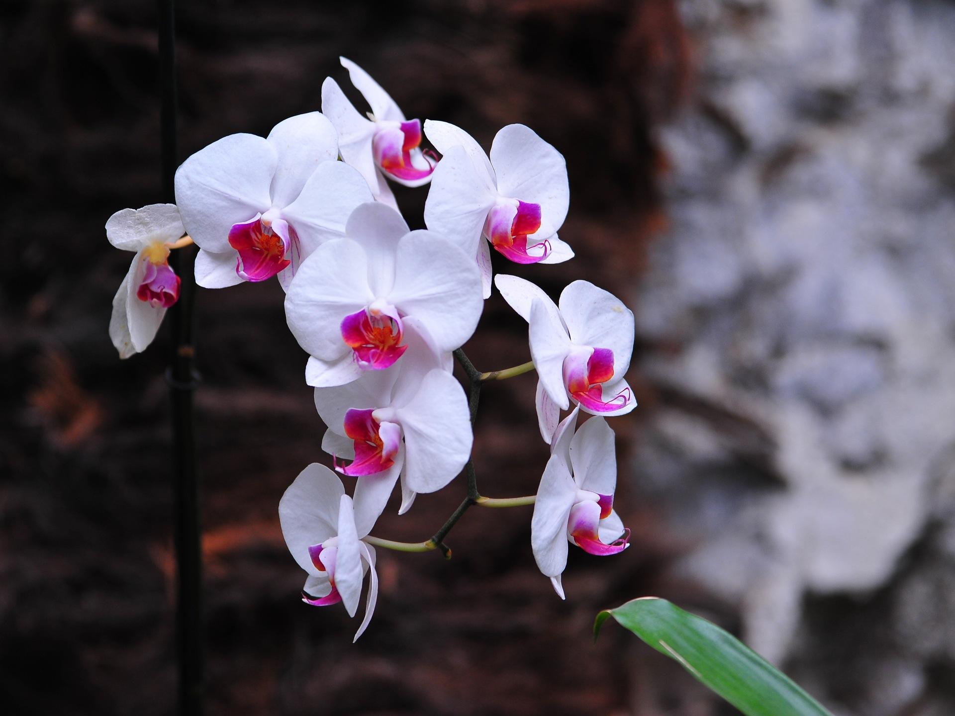 красиво картинки орхидей на ножке остекления контроля