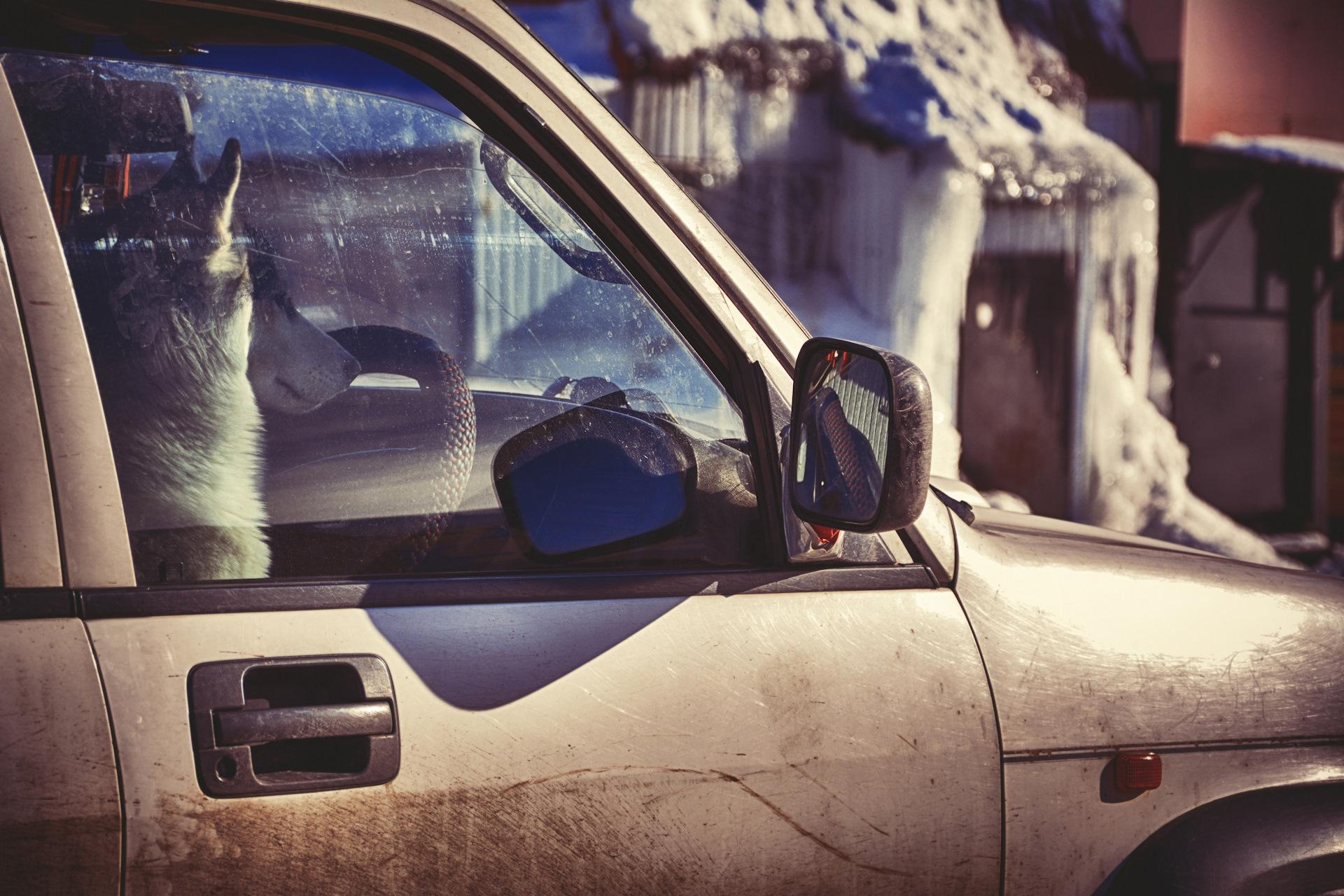 нашем картинка водитель всегда смотри по зеркалам для