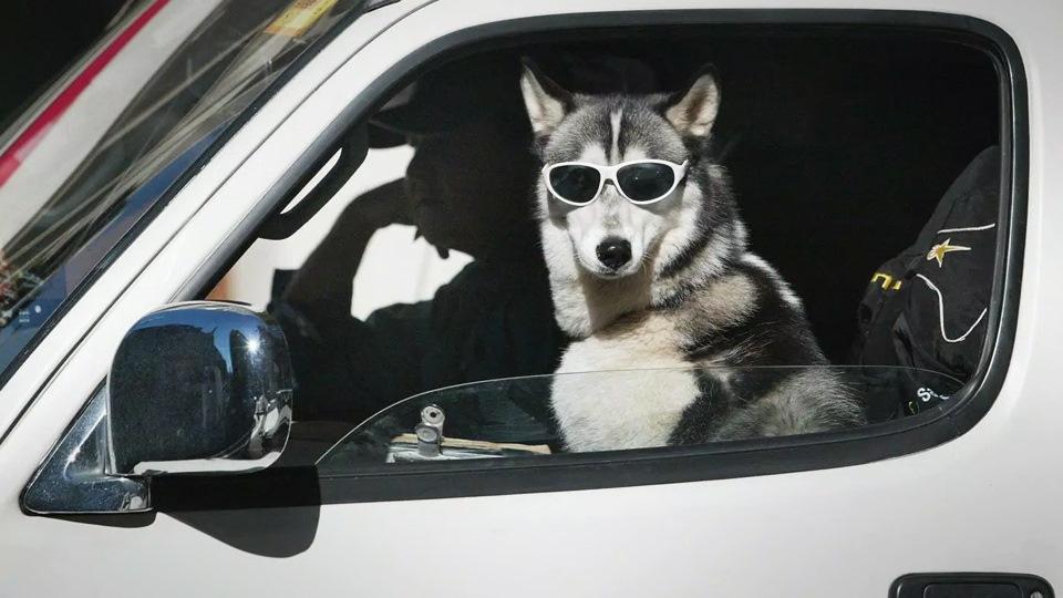 Картинка собака и кошка в машине