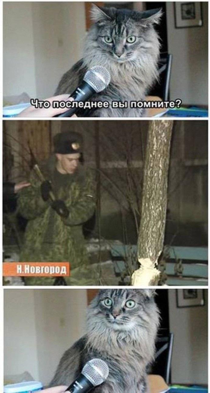 Спас кота новгород