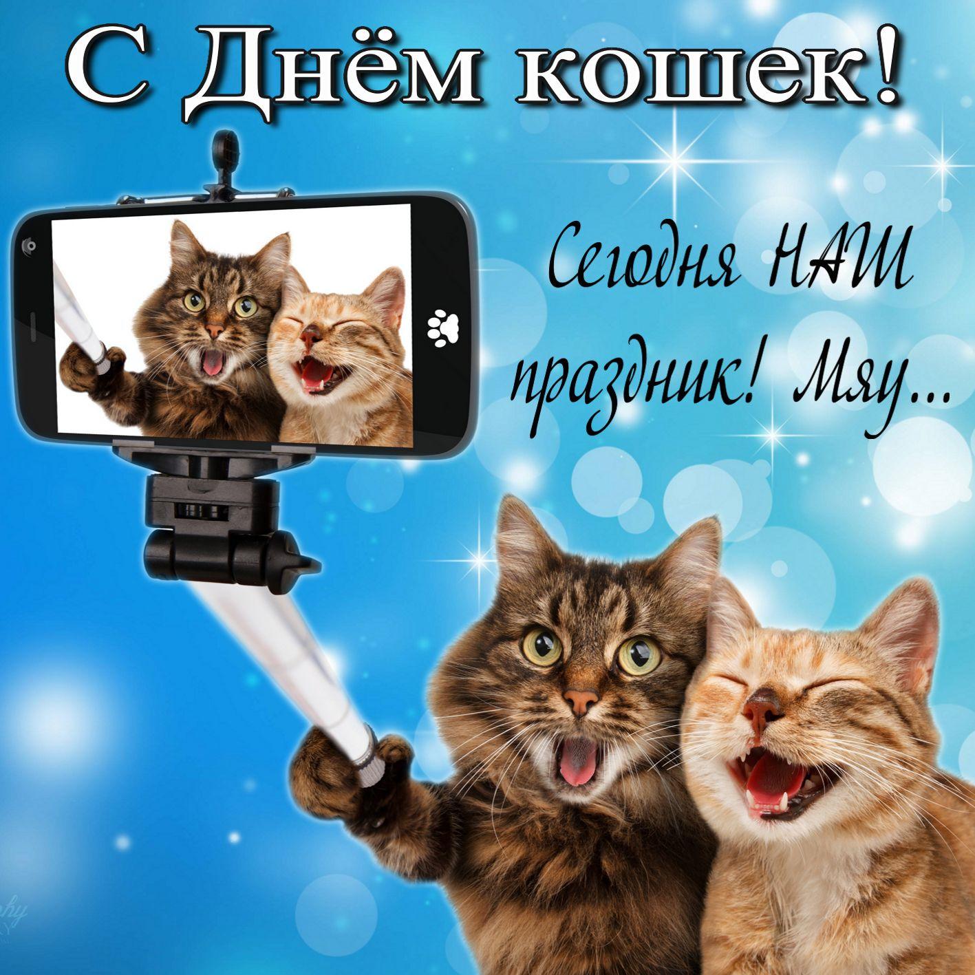 праздник кошек картинка рисовать глаза
