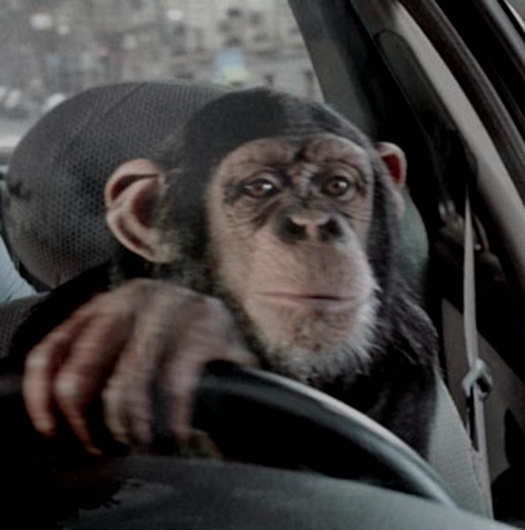 Картинка обезьяны в машине