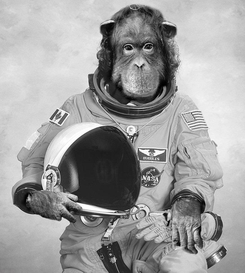 Картинка обезьяны в космосе